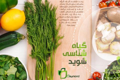 گیاه شناسی شوید